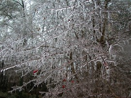 Ice Storm - Anderson SC